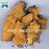 Extracto natural de la raíz de Cuspidatum del Polygonum del 100%