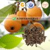 치료 기침 약초 Loquat 잎
