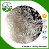 De Gebaseerde Meststof van het Nitraat van het Sulfaat van het ammonium N21%Nnitrogen
