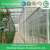Estufa da folha do policarbonato da construção de aço da agricultura para a fruta