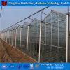 China Proveedor Multi-Span Plástico invernadero agrícola en venta