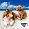 가죽끈 버클 애완 동물 밴대나를 가진 줄무늬 선원 개 목걸이