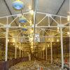 Diseño de la granja de pollos de bajo coste prefabricados de acero estructural de la casa de aves de corral
