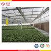 温室の屋根ふき(YM-PC-034)のためのシート10年の保証の空のポリカーボネート