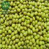 Livro Verde feijão-da-china (nova cultura)