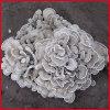 Maitake extracto en polvo de alta calidad de un 30% de los polisacáridos