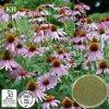 Echinacea Purpurea 추출 Cichoric 자연적인 산 1%~4%; Echinacosides 4%~7%