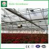 Invernadero de cristal de Venlo de los sistemas de control de precios de fábrica para las flores
