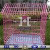 Nuevo diseño de la jaula de pájaros de metal