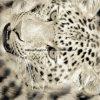 100%Polyester Zerstreung des Fell-3D druckte Gewebe für Bettwäsche-Set