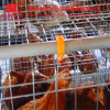 4 pneus um tipo sistema automático da gaiola da camada da galinha para explorações avícolas