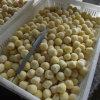 Новая картошка урожая замерли IQF, котор