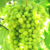 De organische Plantaardige Bron van het Poeder van het Aminozuur van de Meststof