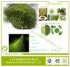 Polvere organica di vendita calda del tè verde di 2017 Matcha per buona pelle ed energia
