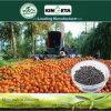 Il carbonio di conservazione di acqua di Kingeta ha basato il fertilizzante organico biologico