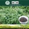 Kingeta contiene il condizionatore di bambù del terreno del carbone di legna dell'efficace fertilizzante del carbonio