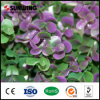 옥외 녹색 식물 합성 인공적인 담쟁이 담