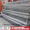 Gabbie di /Battery della strumentazione dell'azienda agricola animale per gli strati (A4L120)