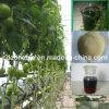 Engrais organique liquide d'engrais d'oligoéléments de chélate d'acide aminé de source liquide d'usine