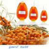 Organisches Seewegdorn-Samen-Öl-organisches natürliches kosmetisches Öl (US, RU organische bescheinigt von IMO)