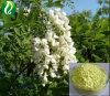 Sophora Japonica Blumen-Auszug-Quercetin 98%