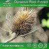 Extrait naturel de Dipsaci de base de 100% (taux : 4:1 ~20 : 1)