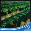 PP non tissé pour couvercle de l'Agriculture, le désherbage nontissé