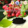 Antociani naturali dell'estratto del mirtillo della pianta di alta qualità diretta del rifornimento della fabbrica