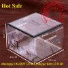 Fornecedores plásticos das caixas de presente do animal de estimação do espaço livre do pacote do bolo de China