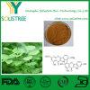 24%/6%粒のGingkoのBilobaの葉のエキスの粉