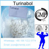 Orales Turinabol 2446-23-3 Muskel-Wachstum der Reinheit-99% 4-Chlorodehydromethyltestosterone