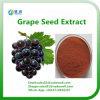 OPC de venda quente 95% do extrato da semente da uva
