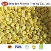 Export der gefrorenen süsser Mais-Standardkerne