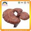 De Paddestoel van Lucidum Reishi van Ganoderma met Polysacchariden