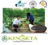 Angurie del fertilizzante organico