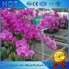 現代野菜ガラス温室のためのHydroponicsのシステム・アクティビティのSeedbed