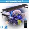48 pulgadas LED regulable de la Luz de acuario de agua salada y depósito de agua dulce con el control inalámbrico