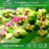 Выдержка 10%-99% корня 100% естественная Pokeberry