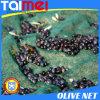 Сеть 100% тени Sun девственницы связанная HDPE & сеть оливки