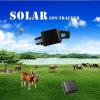 Ultra-lange Batterij zonne-Aangedreven GPS van Huisdieren Drijver met Waterdichte V26