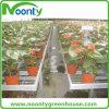 Banco de vegetales y flores de kits de siembra de invernadero