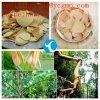 Jaque 100% do longifolia do extrato 84633-29-4 Eurycoma de Tongkat Ali