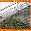 Chambre verte solaire employée couramment pour la plantation végétale