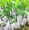 Tessuti non tessuti Anti-UV dei pp Spunbonded per controllo di Weed