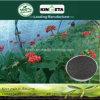 Il carbonio del fertilizzante di conservazione di acqua di Kingeta ha basato il fertilizzante composto NPK 15-5-10