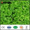 زخرفيّة [شبر] [سغس] اصطناعيّة أخضر جدار يسيّج لأنّ حديقة بينيّة