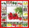 Spaanse pepers van de Banaan van de Kers van de Parels van de Juwelen van het Voedsel van het Fruit van Lampwork van de manier de Plantaardige