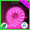 5050 SMD 분홍색 LED 지구 리본 빛을 방수 처리하십시오