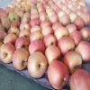 新しい穀物の新しく赤いお祭りのAppleのサイズ138-198