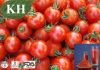 Le lycopène 5%-98%, extrait de tomate fructus Lycopersici Esculenti.